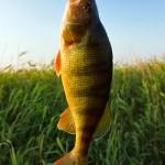 Saginaw Bay Fishing Report 10/02/2014