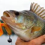 Saginaw Bay Fishing Report  10/30/2014