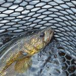Saginaw Bay Area Fishing Report  05/12/2016