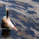 Saginaw Bay Area Weekly Fishing Report 08/25/2016